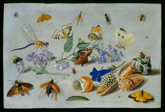 Butterflies and other insects, Jan van Kessel, 1661 small