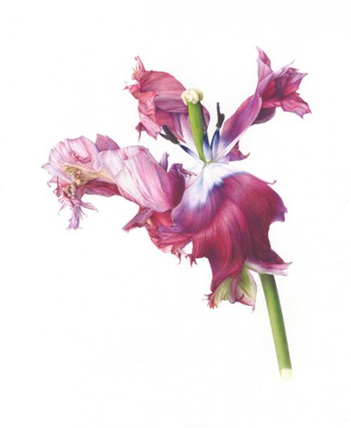 strickland flower 1